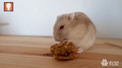 小宠超爱吃的蛋白曲奇饼,就是原材料有些吓人!