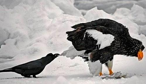 乌黑色来源于这种有三只脚的乌鸦?乌纱帽的由来还有这个隐藏的秘密