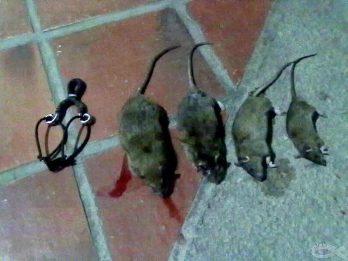 弹弓射老鼠的基本信息