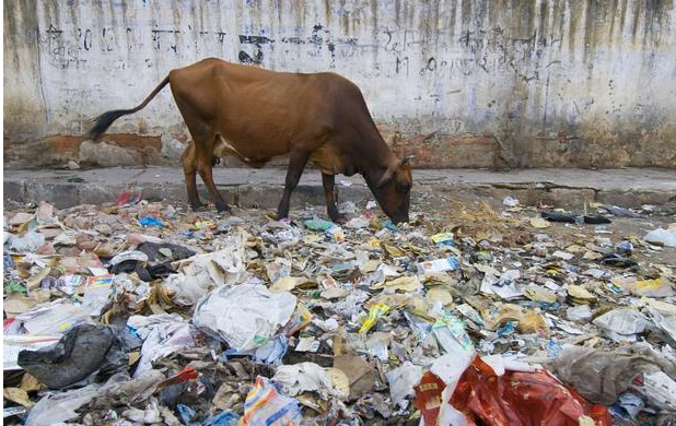 如何评价印度准备接盘中国拒绝的洋垃圾?