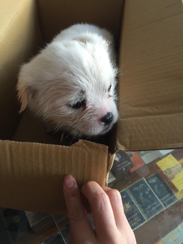 宠物狗的种类图片价格 宠物狗品种大全 网上买狗网卖狗网 - 狗摊子网_