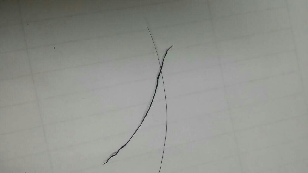 有一个毛囊长出一根头发图片