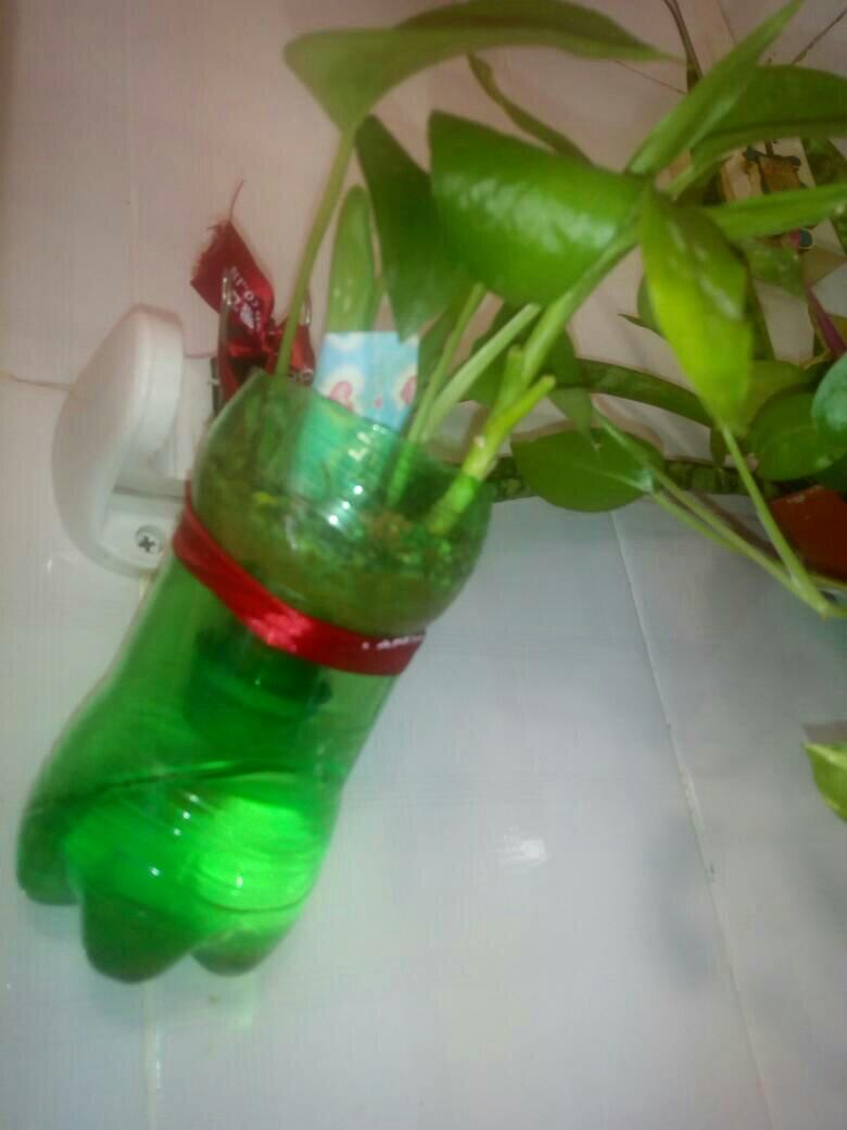 塑料瓶种�9f�x�~j�>�X_塑料瓶手工制作花盆要留孔吗