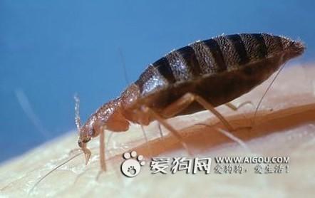Bed Bugs In Spain
