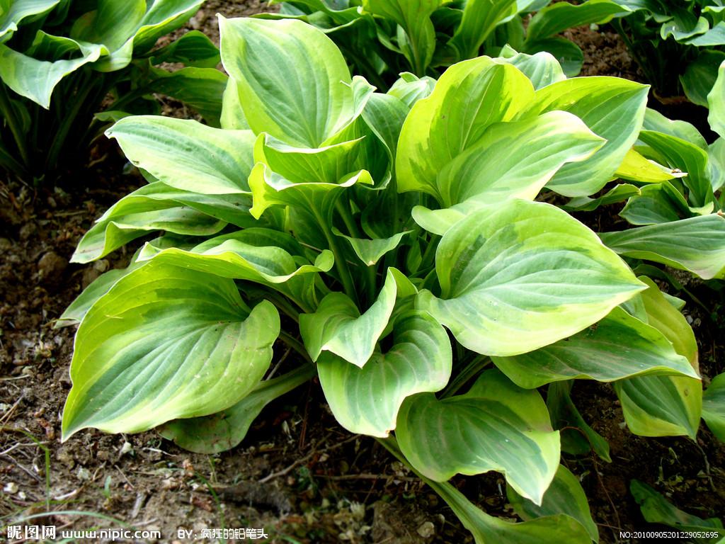 植物花卉图片及名称