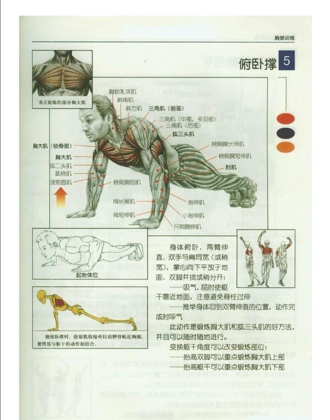 ... 伸 肱 三 头 肌 肌肉 网 主要 锻炼 部位 肱 三 头 肌