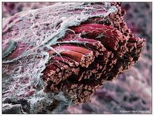 神经,肌肉,上皮组织