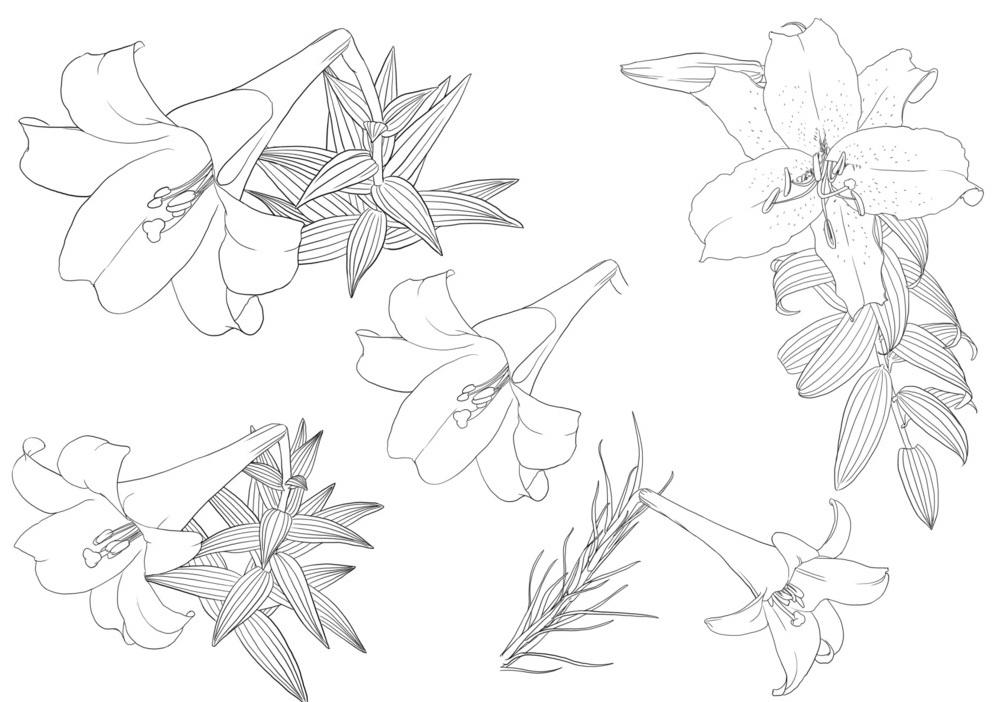 百合花怎么画还有向日葵图片