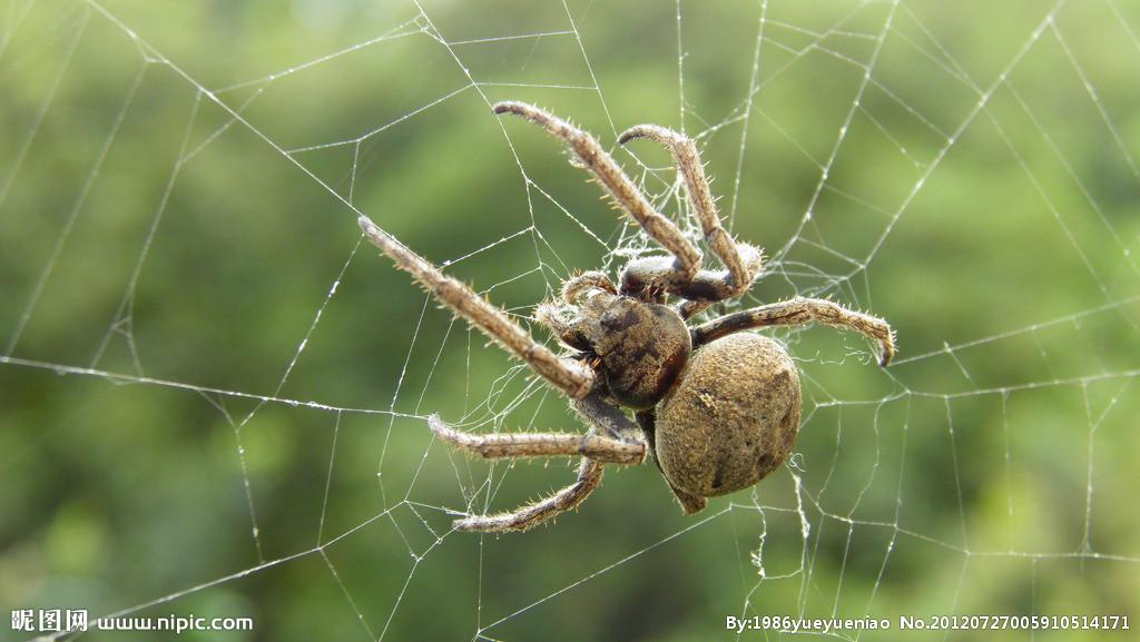 这是什么蜘蛛?有毒没?_百度知道