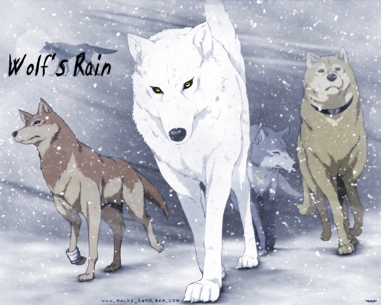 狼���dy��Z9�*�]_来几张狼的图片,可以做头像的.霸气一点的.(图9)