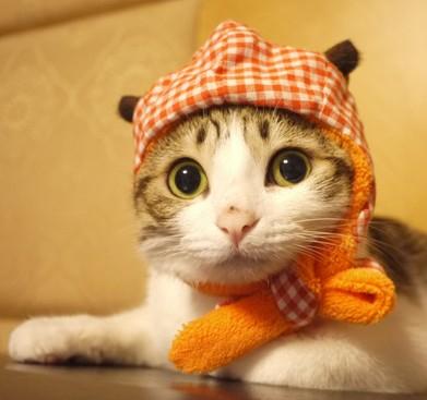 网红瓜皮猫