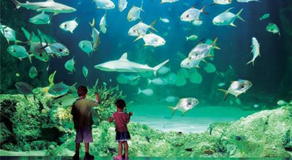 悉尼水族馆门票价格