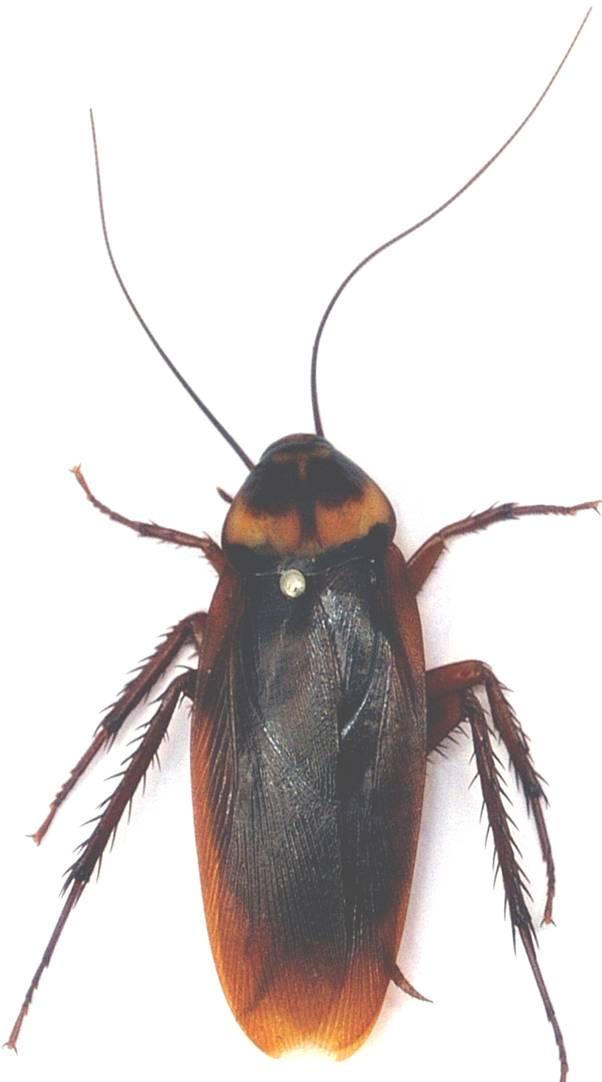 �_这是蟑螂吗?