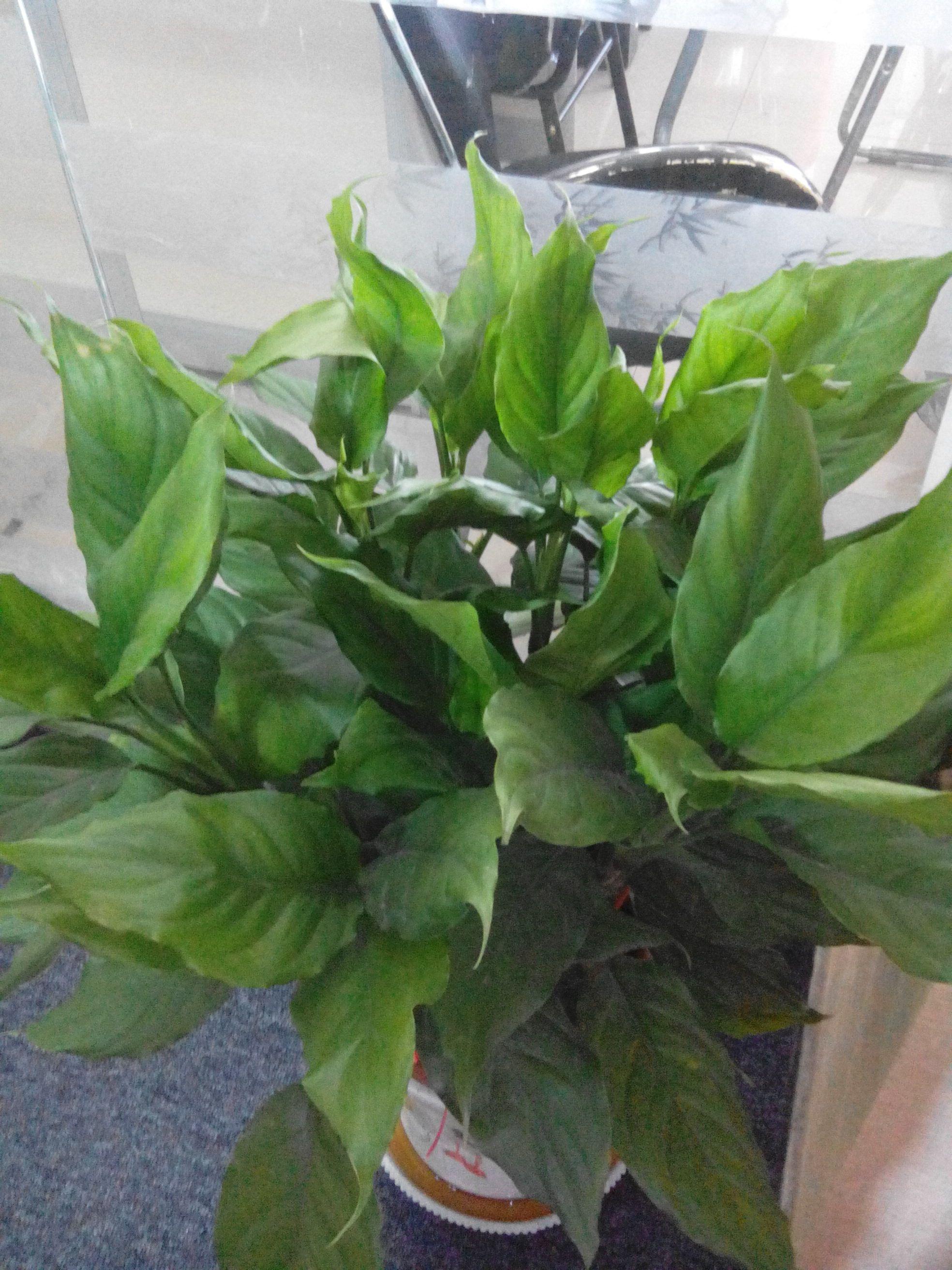 红色叶茎的绿植名称图片