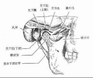 英国医学全在线解剖