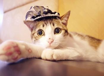 瓜皮猫是什么品种