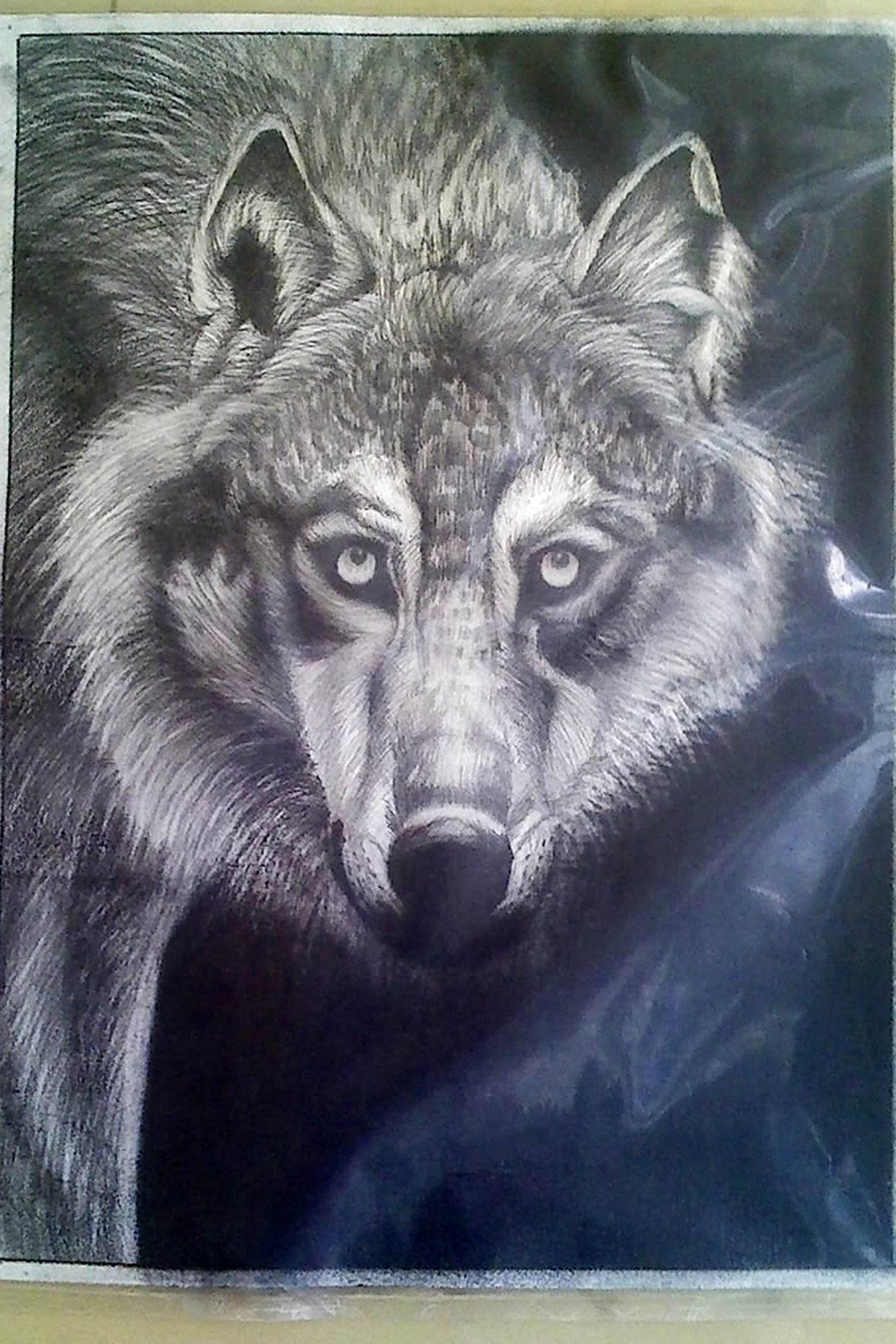 谁有狼头的素描图片啊?谁有狼头的素描图片啊?