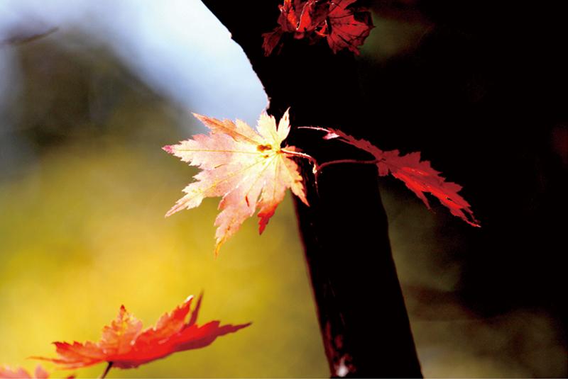秋歌给暖暖赏析作文