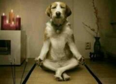 狗狗做绝育后怎么护理