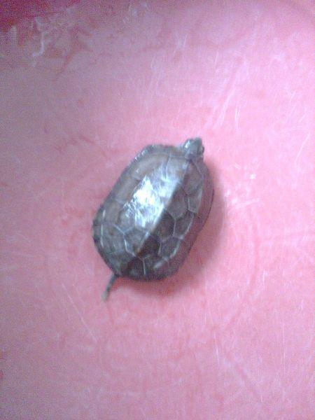 鉴别乌龟的品种