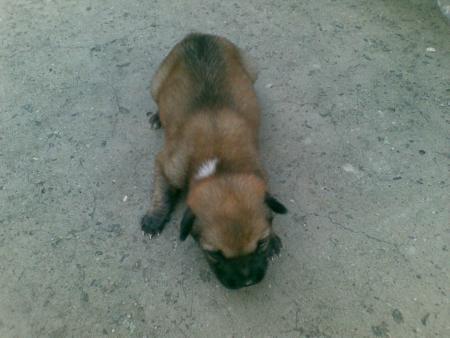 zuoaizishijiaolianshipin_这是什么品种的狗?