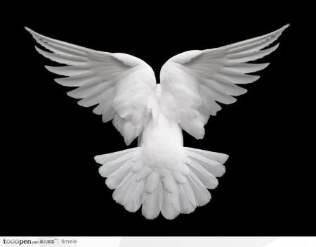 求视频 和平鸽背面的画法素描-和平鸽的画法 和平鸽的画法大全 和平鸽图片