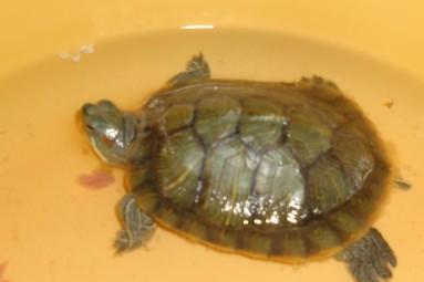 小乌龟冬眠应该怎么养
