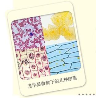 草裙礹c.�d�:yn