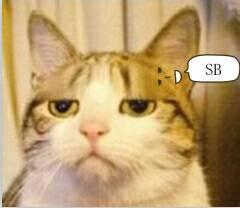 求猥琐猫表情图片
