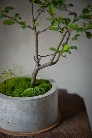 这样的水泥花盆怎么自制?图片