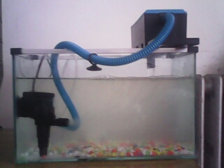 鱼缸用过滤器了,但还浑 .12w的 鱼缸35*20*20的 我是新手 别喷我