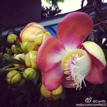 花卉 求此花的名字