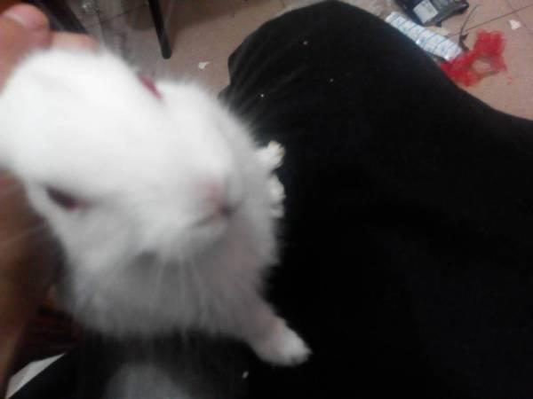 兔子的公母怎么辨别 它是公的母的图片