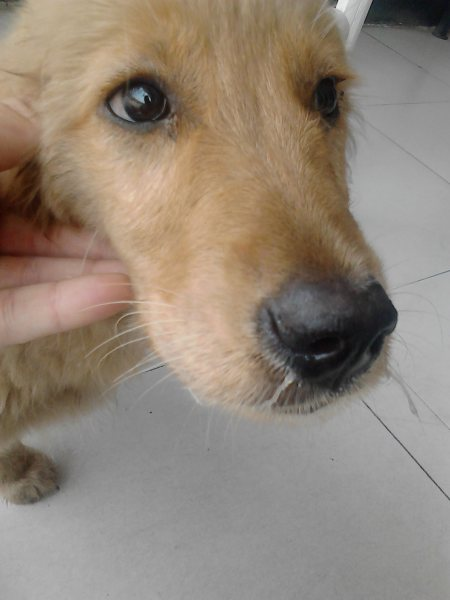 狗吐白色粘稠液体