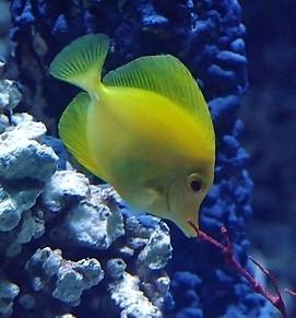 这是热带鱼叫什么名字高清图片
